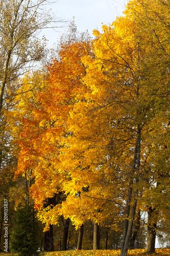 Foto op Aluminium Bomen beautiful trees