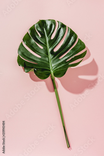 Monstera Canvas-taulu