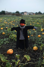 Spooky Scarecrow For Halloween In Field