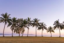 Tall Palm Trees At Dawn