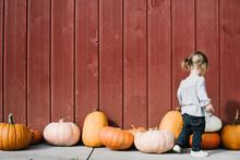 Toddler Looking At Row Of Pumpkins