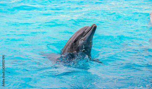 Foto op Plexiglas Dolfijnen Riccione , Włochy - 18 maja 2018: Delfin w Oltremare Family Experience Park w słoneczny dzień