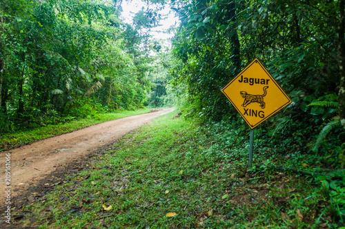 Fotografie, Obraz Muddy road in a jungle leading to Cockscomb Basin Wildlife Sanctuary, Belize