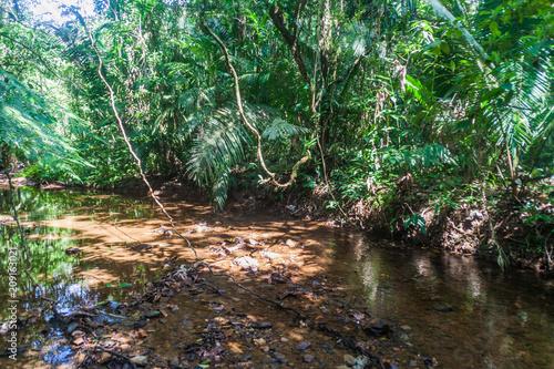 Tablou Canvas Small creek in Cockscomb Basin Wildlife Sanctuary, Belize.