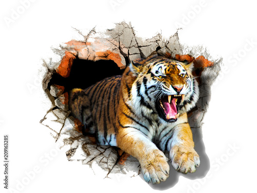 Papiers peints Tigre Sticker tiger jumps out of the wall . 3D rendering.