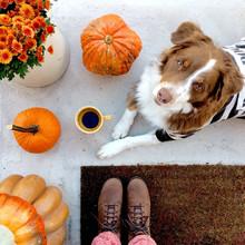 Cute Dog Wearing Halloween Costume Amidst Autumn Decor
