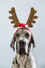 Adorable Dog Wearing Christmas Decor
