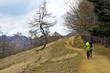 雲取山のダンシングツリー