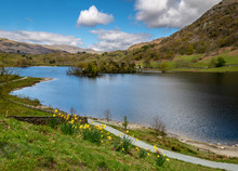 Springtime At Rydal Water In The Lake District Of England, Great Britain