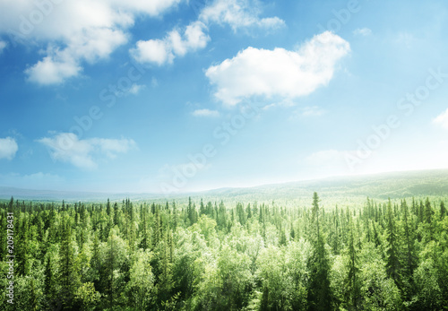 Wall Murals Forest forest in sunset time
