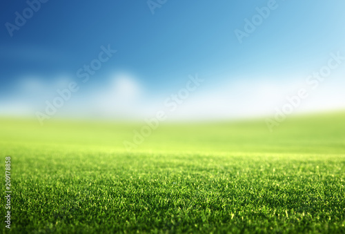Photo sur Aluminium Herbe field of spring grass (shallow DOF)