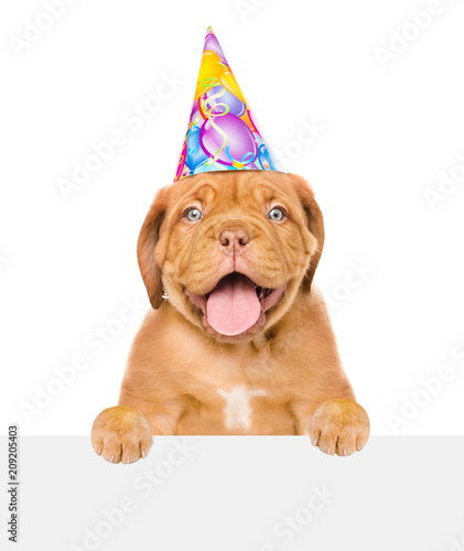 Funny Puppy In Birthday Hat Above White Banner Isolated On Background