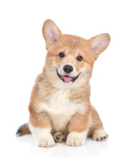 Happy Red Pembroke Welsh Corgi...