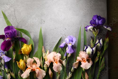 Poster Iris Natural background with iris