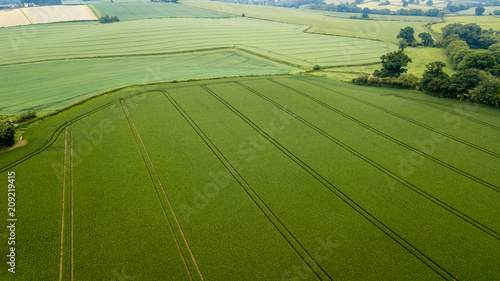 Obraz Aerial drone view of neatly ordered farmed fields and crops - fototapety do salonu