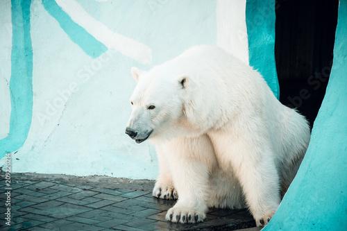 Staande foto Ijsbeer Portrait of a polar bear