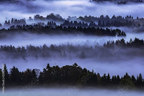 Tuinposter Aubergine Morning forest in Czech Switzerland