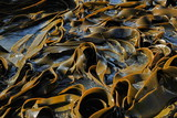 Sea kale texture