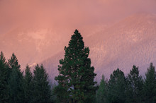 Alpenglow On Mountains With Trees