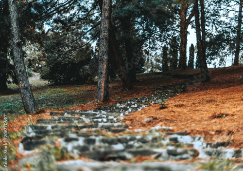 Fotobehang Trappen Ancient fairy stair made of stone blocks in a forest or in some atmospheric park needle-covered with the ground, trees and other plants on the sides; autumn scenery with shallow depth of field