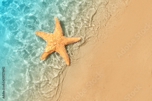 Fotomural  starfish on the summer beach in sea water.