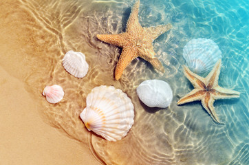 Fototapeta Do baru starfish and seashell on the summer beach in sea water.