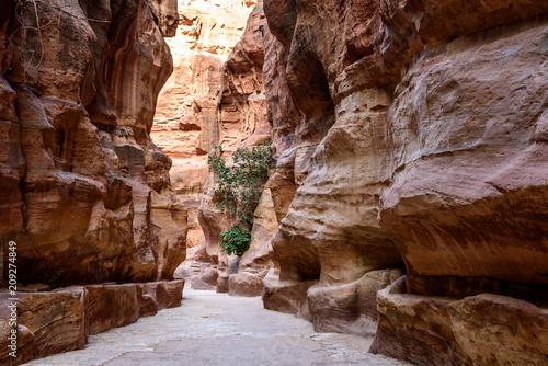 Foto op Aluminium Bruin Giordania, Petra