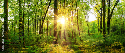 Foto op Canvas Bos Beautiful forest panorama in spring with bright sun shining through the trees