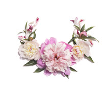 Pink Peony Flowers On White Background