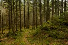 Appalachian Trail In The Spruc...
