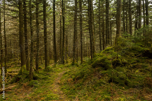 Appalachian Trail in the Spruce-fir Forest in Virginia. Fototapet