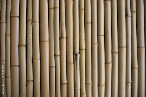 Foto op Plexiglas Bamboe 대나무 숲