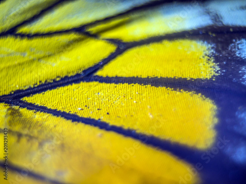 Photo sur Aluminium Macro photographie macro butterfly wings