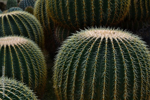Tuinposter Cactus 大きなサボテン