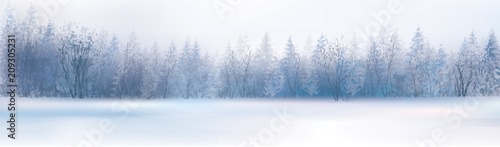 Valokuva  Vector winter landscape with forest background.