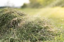 Mowed Hay On The Field.