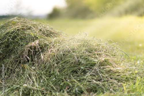 Fotografia Mowed hay on the field.