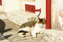 A White And Grey Adult Stray C...