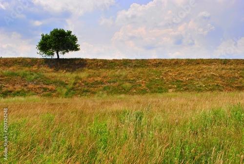 Fototapeta premium Pejzaż z samotnym drzewem