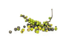 Unripe Fresh Black Pepper Grains And One Green Vine Isolated On White Background.
