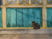 A Cat Sitting On Window In Wooden House