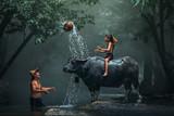 Tata i syn to styl życia rodzinnego rolnika na wsi w Azji. Tradycyjne życie sławnego na wsi Tajlandii. Radość dzieci z bawołem w rzece w lesie. - 209342462