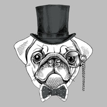 Pug Portrait In A Gentleman Hat And With Monocle. Vector Illustration.