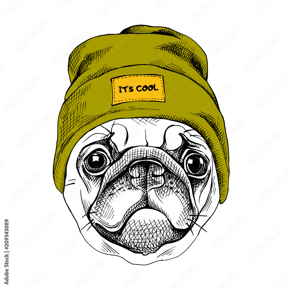 Fototapeta Portrait of the Pug in a hipster hat. Vector illustration.