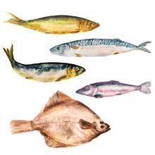 Set Of Watercolor Images Of Di...