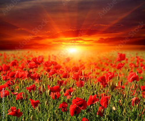 Deurstickers Rood paars poppy flower meadow