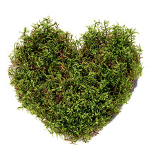 Green Moss Heart Shape Isolate...