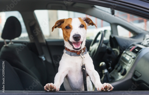 Spoed Foto op Canvas Hond Cute dog sit in the car on the front seat
