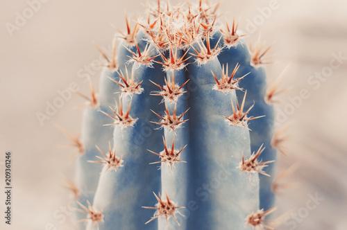 Papiers peints Cactus Background with big cactus, toned image