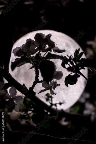 Луна ночью в цветах